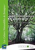 Arbres remarquables en Bretagne - Un patrimoine à découvrir