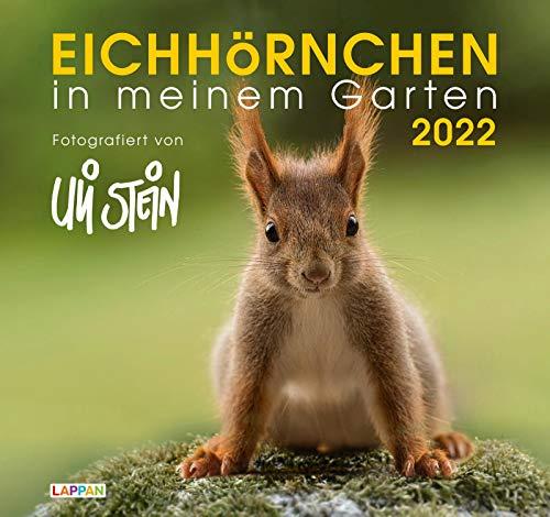Eichhörnchen in meinem Garten 2022: Monatskalender für die Wand im Großformat