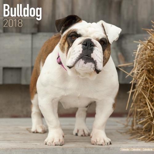 English Bulldog Calendar - Bulldog Wall Calendar - Dog Breed Calendars 2018 - Dog Calendar - Calendars 2017 - 2018 wall calendars - 16 Month Wall Calendar by Avonside