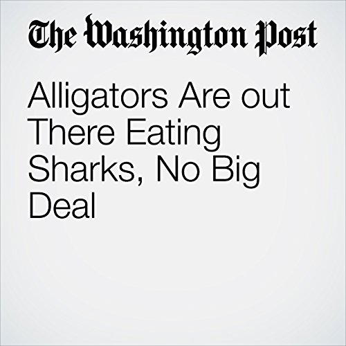 Alligators Are out There Eating Sharks, No Big Deal copertina