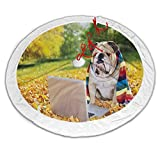 ScottDecor English Bulldog Christmas Tree Skirt red and Gold Dog in The Park with a Laptop and Rainbow Colored Scarf Funny Photography for Use with Small to Average Size Xmas Trees Multicolor 48 Inch