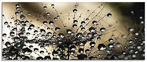 Artland Glasbilder Wandbild Glas Bild einteilig 125x50 cm Querformat Natur Botanik Blumen Pusteblume Frühling Wassertropfen Modern S5YR