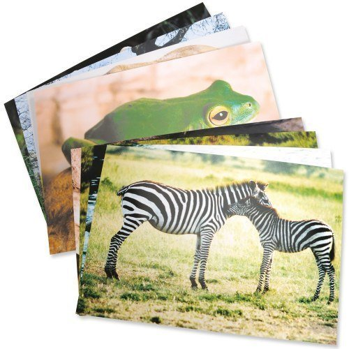 Stages Learning Materials Wild Animal Poster Set by
