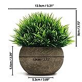 Zoom IMG-1 belle vous set mini piante
