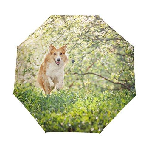 MyDaily Border Collie Hundeschirm, automatisches Öffnen/Schließen, leicht, kompakt, Winddicht