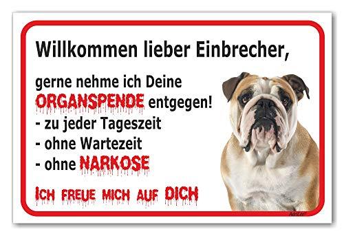 AdriLeo Schild - Vorsicht Englische Bulldogge - Willkommen Lieber Einbrecher - (20x30cm) / Achtung Hund Wachhund