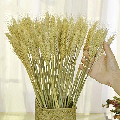 TooGet - Ramo de hojas de trigo secas para ramo de flores, 80 unidades de acrobacias naturales para la oreja de trigo, ramo de hierba seca, arreglos para el hogar, boda, tienda decorativa
