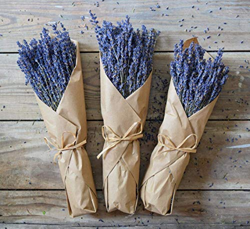 Dried Lavender Bundle Freshly harvested Real Natural Lavender Bunch Royal Velvet Lavender Bundles for DIY Home Office Party Wedding Decor, 10'-14', Long Stems