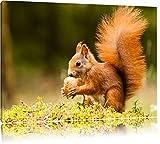Eichhörnchen mit Nuss Format: 80x60 auf Leinwand, XXL