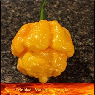20 Seeds of Yellow Trinidad Moruga Scorpion Hottest Chili pepper EXTREME Rare Chile