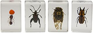 Celestron 44409 3D Bug Specimen Kit #3 (Black, Orange, Brown)