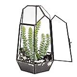 """The Fellie Glass Terrarium, 9.8"""" Tabletop Succulent Plant Terrarium Geometric with Door, Black"""