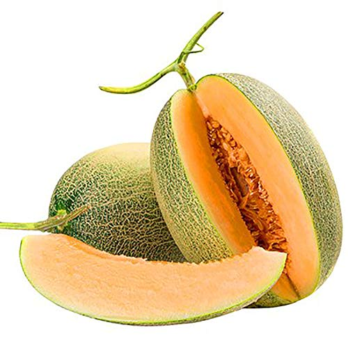 SimpleMfD 20 Cantaloupe Seeds/Pack