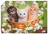 Artland Poster Kunstdruck Wandposter Bild ohne Rahmen 70x50 cm Katze Tiere Katzenbaby Baby Landhaus Shabby Chic Blumen Botanik T6BM