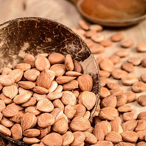 Aprikosenkerne | sehr hoher bitter Anteil | naturbelassen | Aprikosen Kerne | Vitamin B17 | ganze Kerne | gesund | ohne Zusätze | extra herb | unbehandelt | Frischebeutel | Premium Qualität | 2500g