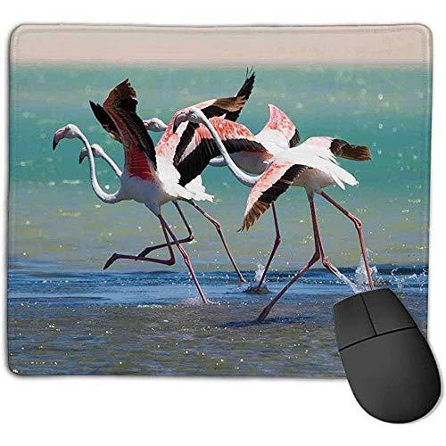 Muispad-bundel muismattenpad Flamingo Flamingo-fornuis, die van de Lagune onderscheidt om water te vliegen en natuurlijk leven te vliegen Afbeelding S.
