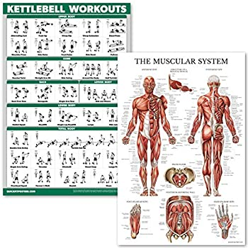 QuickFit Kettlebell Workouts and Muscular System Anatomy Poster Set - Laminated 2 Chart Set - Kettle Bell Exercise Routine & Muscle Anatomy Diagram  Laminated 18  x 27