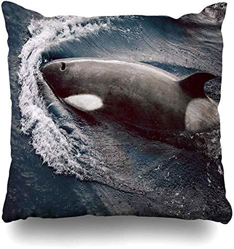 Throw Pillow Cover Black Killer Whales Antártida Colores Blancos Colores Dive Fin Design Funda de Almohada Killer para el hogar Funda de Almohada Decorativa Cuadrada con cremallera16x16pulgada