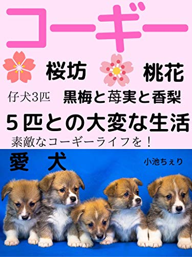 愛犬コーギー 桜坊 桃花 仔犬3匹 黒梅と苺実と香梨 5匹との大変な生活
