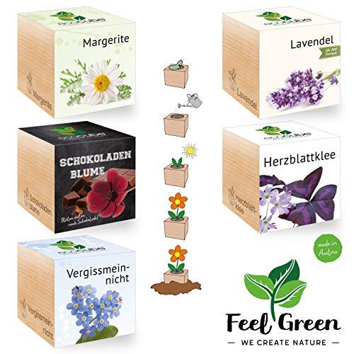 Feel Green Ecocube - Ensemble de 5 variétés - 25% d'économie dans Le Paquet, Plantes en Bois - Idée Cadeau Durable - Grow Your Own/Culture - Fabriqué en Autriche