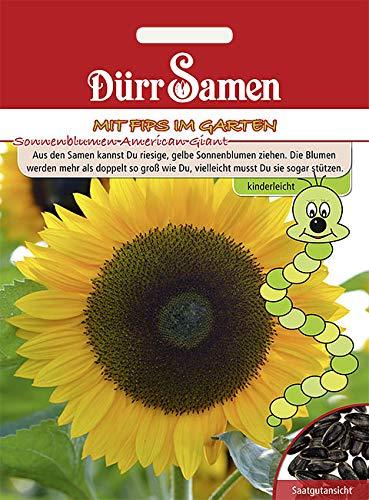 """Dürr-Samen - 10 x Sonnenblumen Kindersorte \""""American Giant\"""" Saatgut für Balkon, Garten & Hochbeet - Sonnenblumensamen ideal als Geschenk für Kinder - Sonnen Blumen Samen Saat für zum Pflanzen"""
