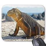 El cojín de ratón Cosido Durable del Juego de Yanteng, Animales de la Playa de la impresión de los Animales de la Playa de los Dragones de Komodo de los lagartos