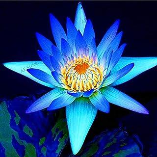 Amazoncom Blue Lotus Seeds