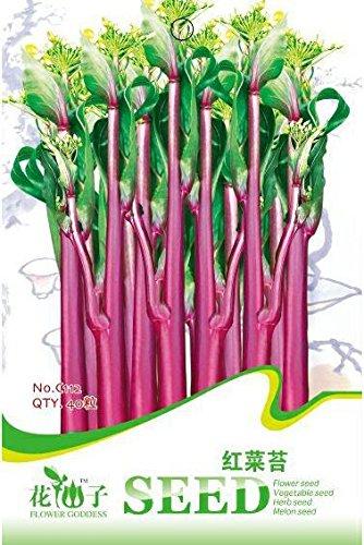 package couleur famille semences de légumes graines de coriandre bio, légumes Pack balcon famille d'environ 150 / sac