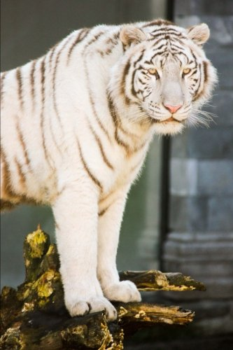 Regal White Tiger Big Cat Journal: 150 Page Lined Notebook/Diary