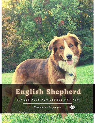 English Shepherd: Choose best dog breeds for you