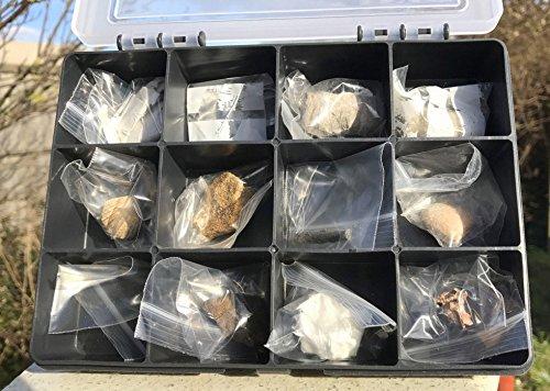 SilverGeo Fossilienset für Kinder (echte Fossilien)
