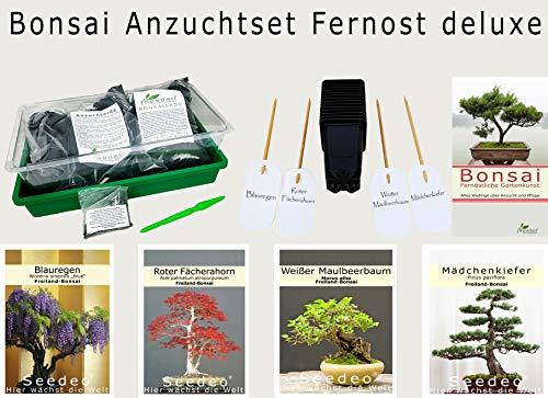 Seedeo® Bonsai Anzuchtset Fernost deluxe (Roter Fächerahorn, Weißer Maulbeerbaum, Blauregen, Mädchenkiefer.)