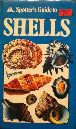 09 Seashell - 8