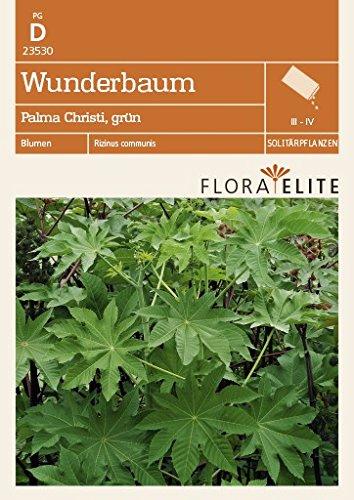 Flora Elite 23530 Wunderbaum Palma Christi, grün (Wunderbaumsamen) [MHD 06/2020]