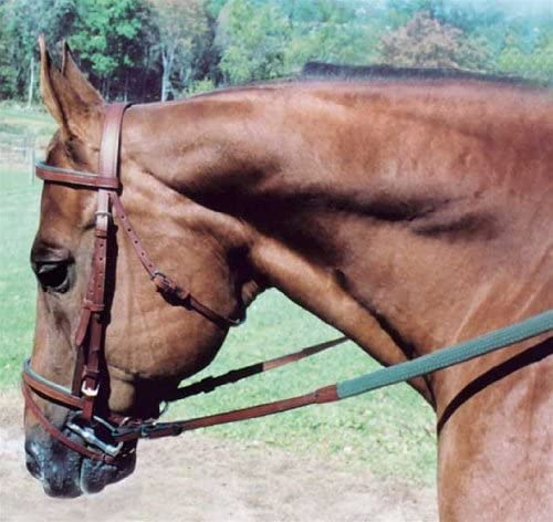 Tory Leather Max 51% OFF Padded Headstall Excellence