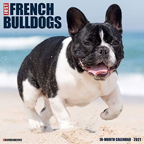 Just French Bulldogs 2021 Wall Calendar (Dog Breed Calendar)