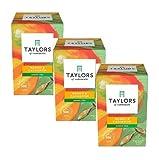 Taylors of Harrogate Sencha Green Tea con mango y cardamomo - 3 x 20 bolsitas de té (90 gramos)