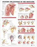 Anatomy And Injuries Of The Shoulder Chart