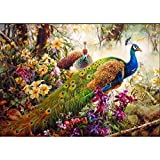 Paint by Numbers for Adults, 16x20 Inches Oil Painting for Adults Beginners with Brushes and Acrylic Pigment Peacock