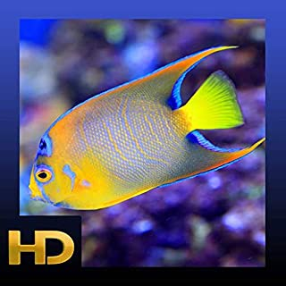 Peaceful Aquarium HD