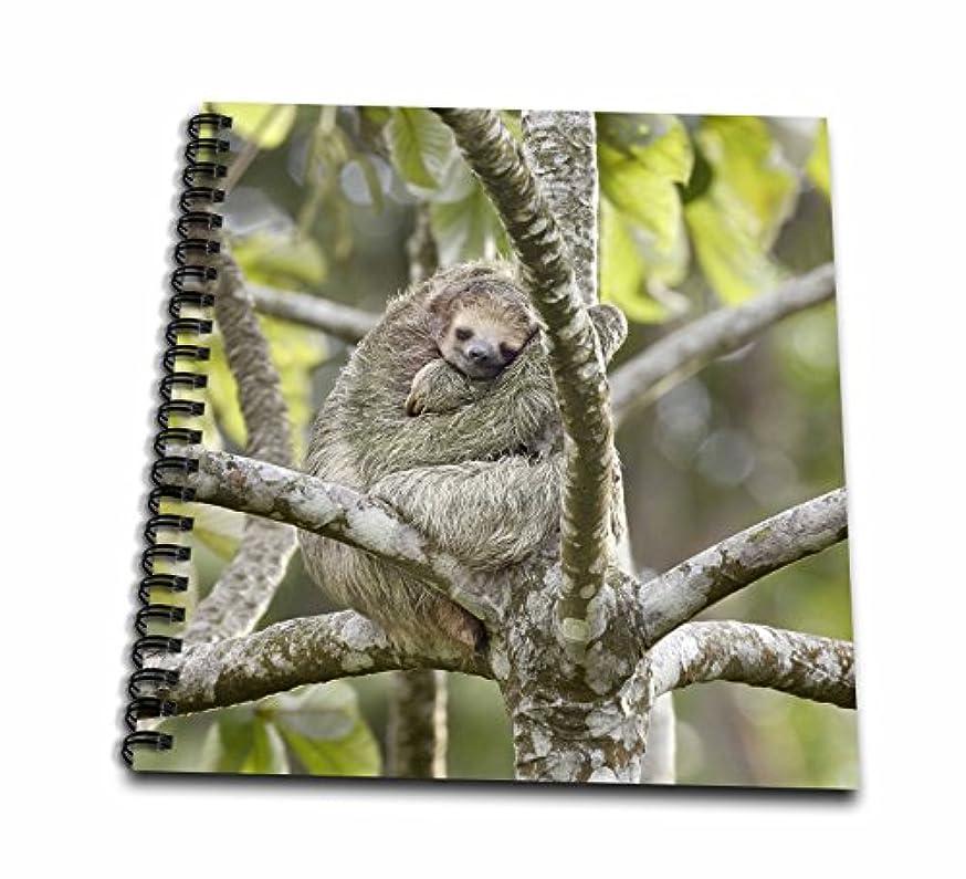 3dRose db_87142_1 Costa Rica, Three-Toed Sloth Wildlife Sa22 Bja0001 Jaynes Gallery Drawing Book, 8 by 8-Inch