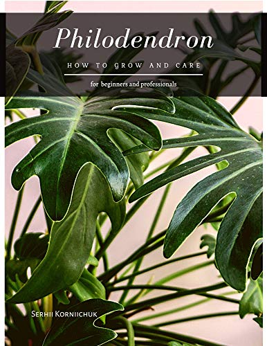 Philodendron: How to grow and care