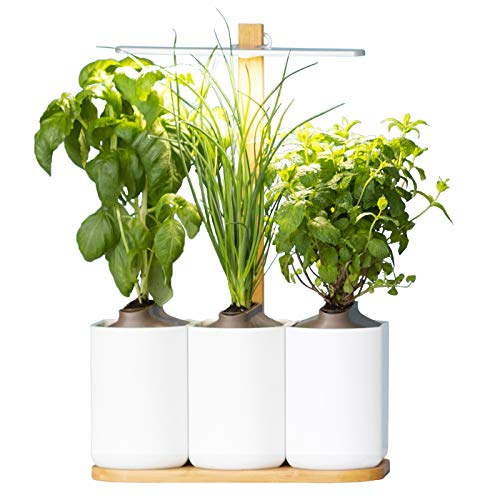 Lilo, your smart indoor garden ¦ new version ¦ Easily grow your own fresh herbs all year round ¦ Includes basil, mint and chives