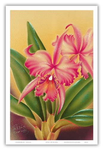 Pacifica Island Art Cattleya Orchidee Hawai'i - Die Königin Der Orchideen - Alte Hawaiianischer Airbrush Kunst von Frank Oda (Hale Pua Studio) c.1940s - hawaiianischer Kunstdruck - 31cm x 46cm