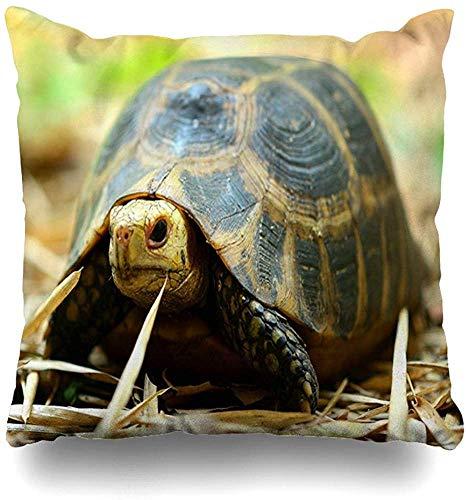 JONINOT Doble Cojines Fundas 18' Piso Naturaleza Tortugas Concha Residencial Bosque Lento Salvaje Alto Más Funda de Almohada Suave para la Piel
