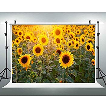 Best sunflower field background Reviews