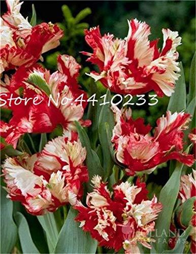 Bloom Green Co. 50 PC Rare Farbe Lila...