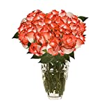globalrose 50 fresh cut white roses with dark pink tips – fresh flowers express delivery – perfect for weddings, anniversary or any occasion.