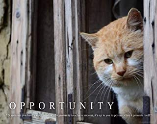 Cat Motivational Poster Art Print 11x14 Kitten Toys Collar Wall Decor Pictures