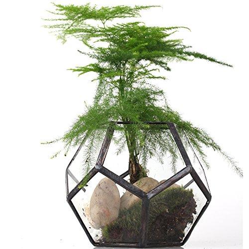 Mini vaso trasparente a forma di dodecaedro in vetro, piccolo vaso per piante grasse, vaso di vetro, 11cm (larghezza) x 11cm (lunghezza) x 9cm (altezza) Piante non incluse
